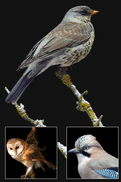Bird-Preperation