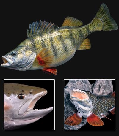 Fish-Preperation