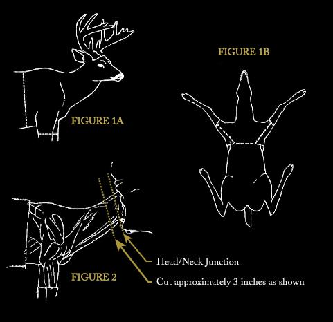 Mount-Sketches-Shoulder